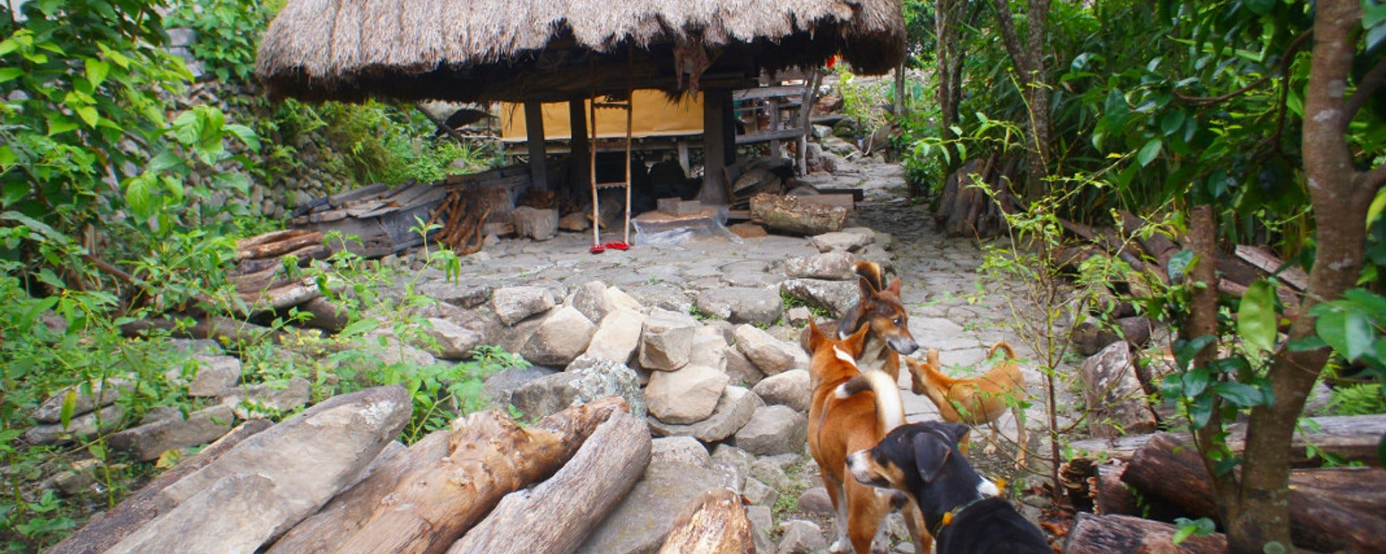 Meet the Guide Dogs of Batad Rice Terraces